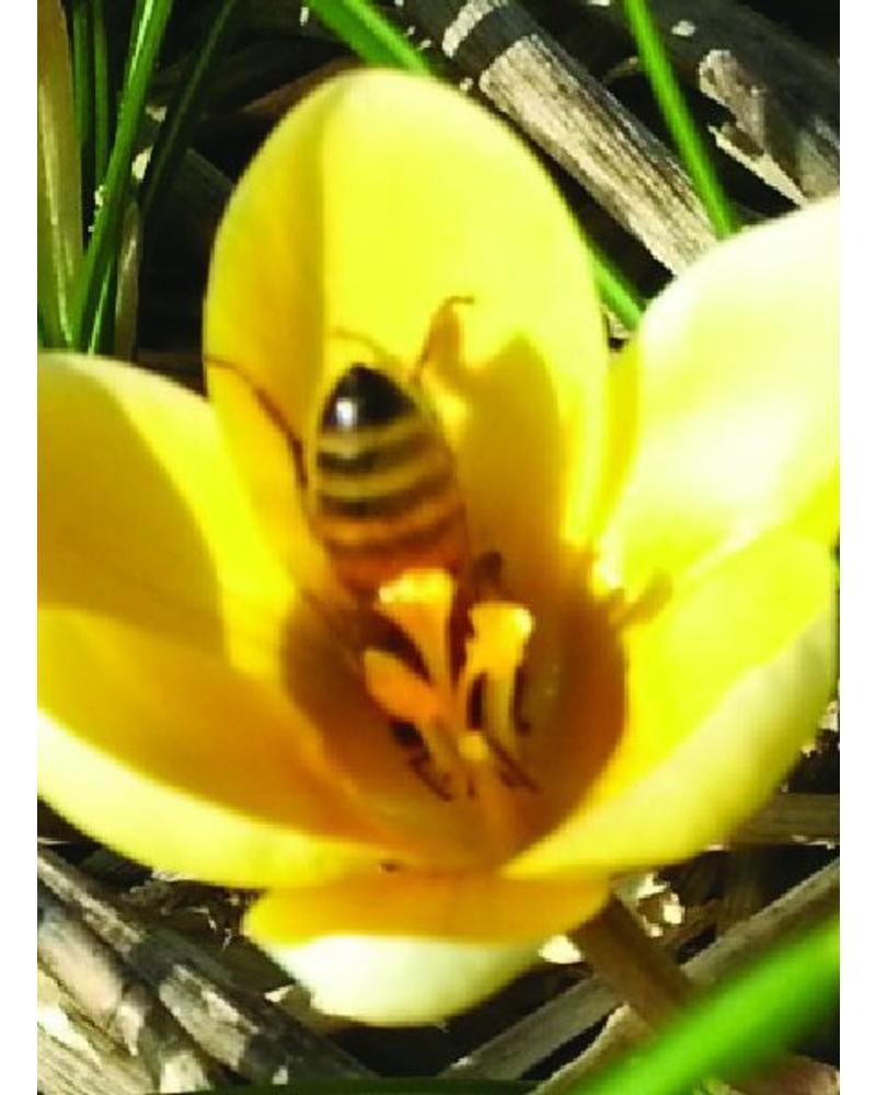 880 bloembollen. De vroegste bloeiers met de hoogste nectar- en stuifmeelwaarde.