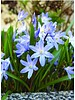 150 dagen bloei van voorjaarsbloeiende bloembollen in straat, wijk, boomcirkels en potten.