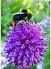 Bijen-Vlinderpakket 2 - 2020