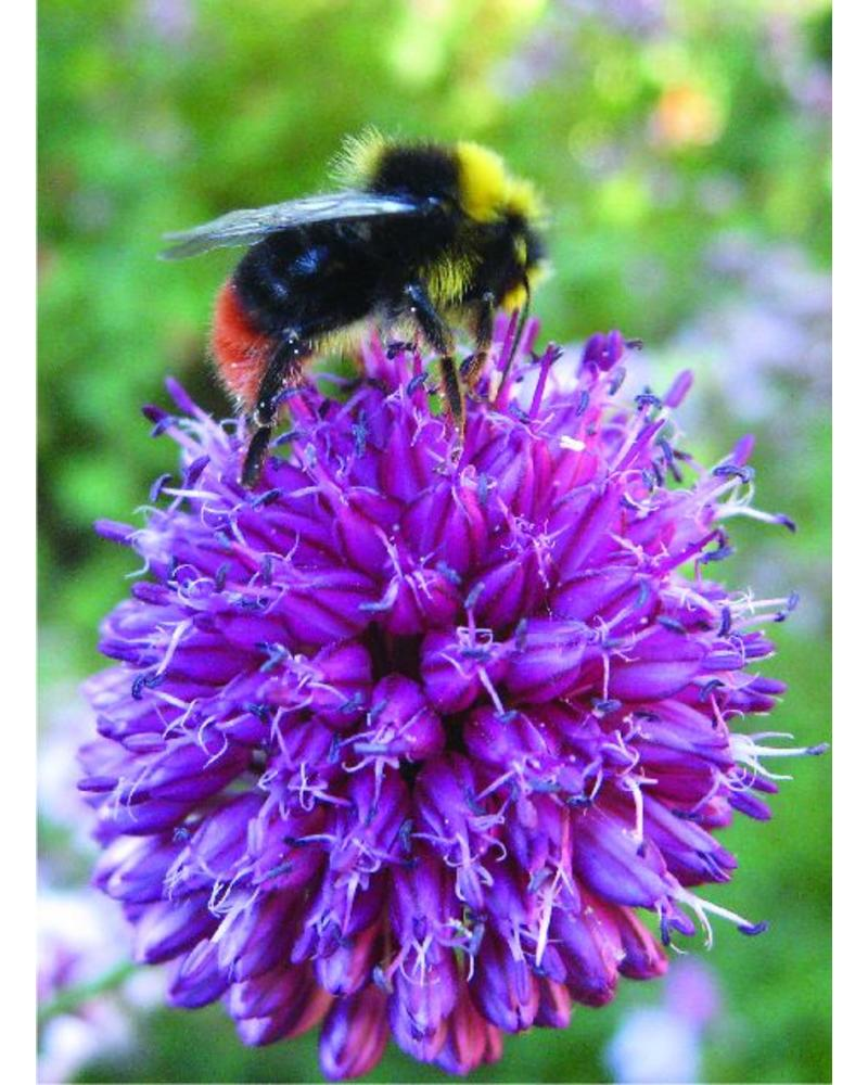 Bienen-Schmetterling Paket 2 - 2020