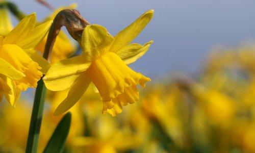 Veel verrassende soorten groot en klein en .. bezocht door bijen en hommels