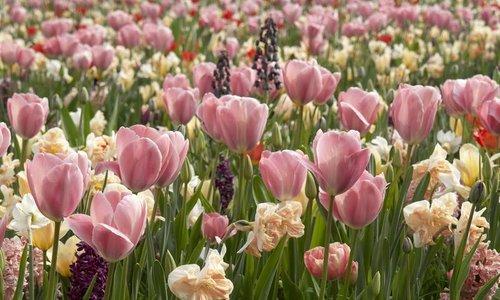 Kleurrijke blikvangers in tuin en park