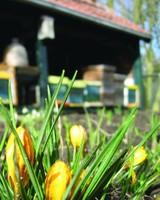 Beekeeper Bulk Package - B