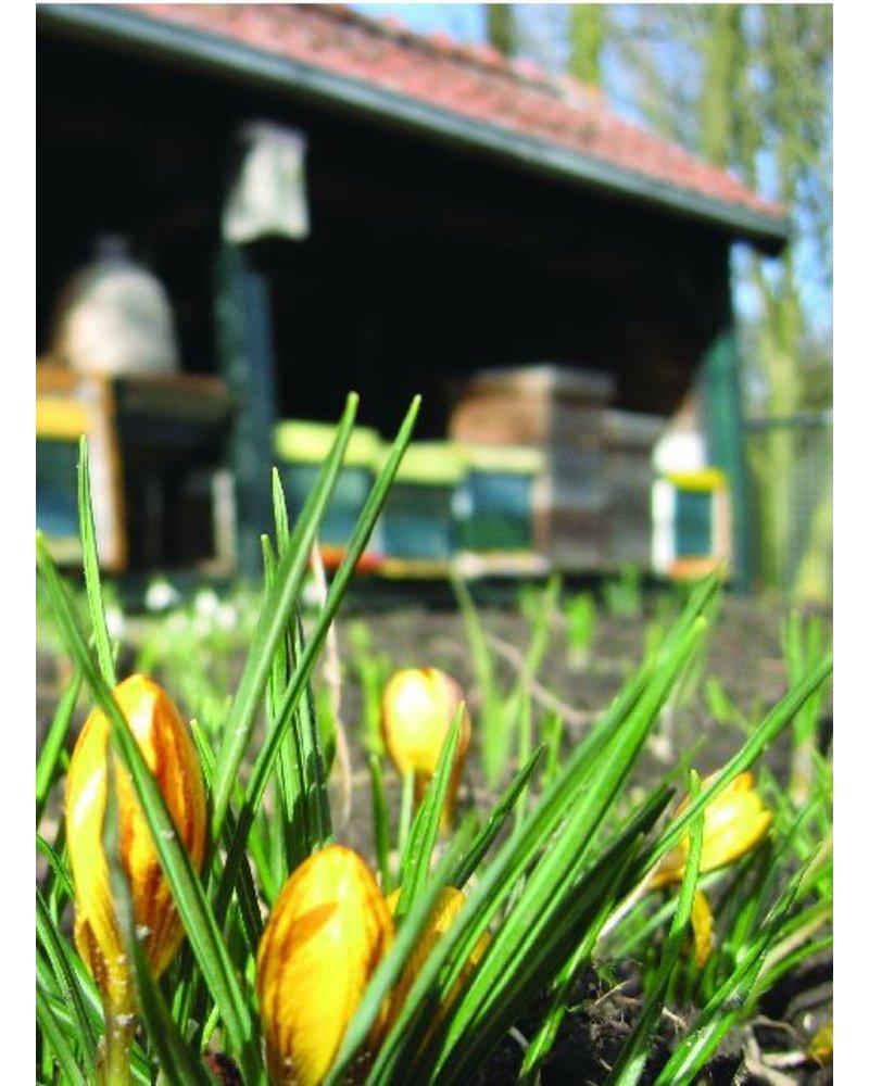 Groot imkerpakket met 700 bloembollen. Aanvulling voor wie al bollen heeft staan. De vroegste bloeiers met de hoogste nectar- en stuifmeelwaarde.