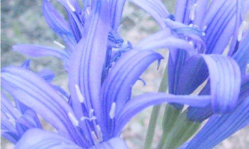 Spezielle Blumenzwiebel arten