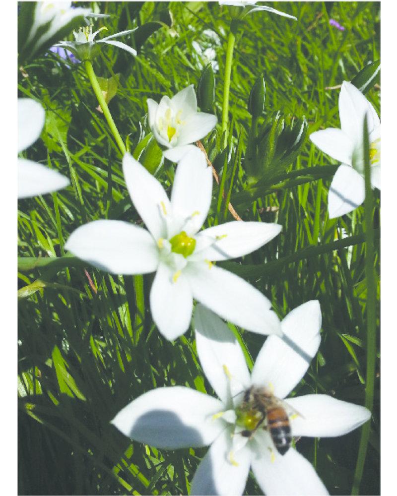 Groot imkerpakket B met 700 bloembollen. Aanvulling voor wie al bollen heeft staan. De vroegste bloeiers met de hoogste nectar- en stuifmeelwaarde.