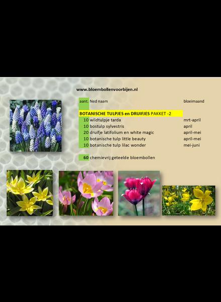 Botanical Tulips and Grapes Mix -2