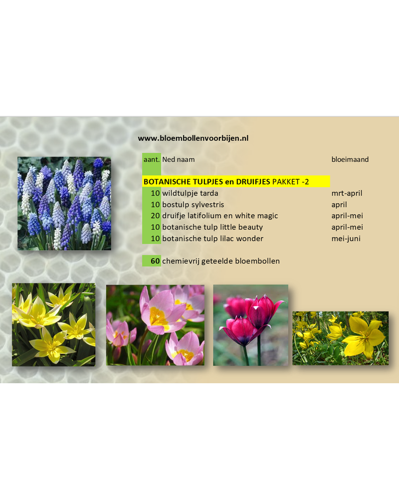 Botanical Tulips and Grapes Mix -2  - Grown free from chemicals