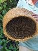 Small Beekeeper package  02 - 100% chemicalfree grown