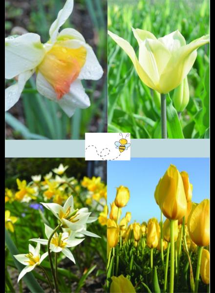 Tulp Narcis mix 02 - cheerfull spring