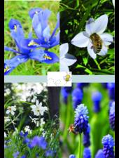 Bee Mix 02 - blue shades