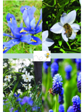 Bijen Mix 02 - blue shades