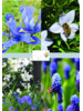 Bee Mix 02 - blue shades - grown 100% free of chemicals
