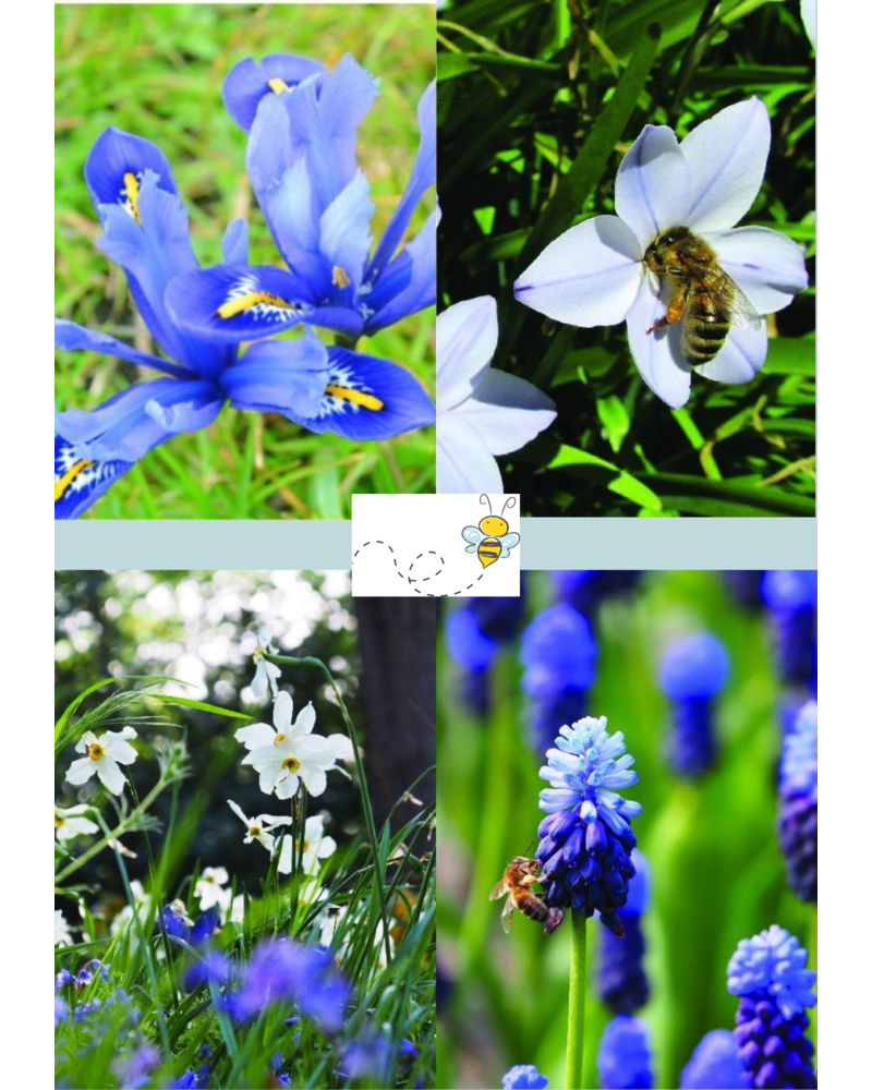 Bijen Mix 02 - blue shades  - 100% chemievrij geteeld