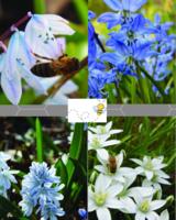 Bee Mix 01 - blue shades