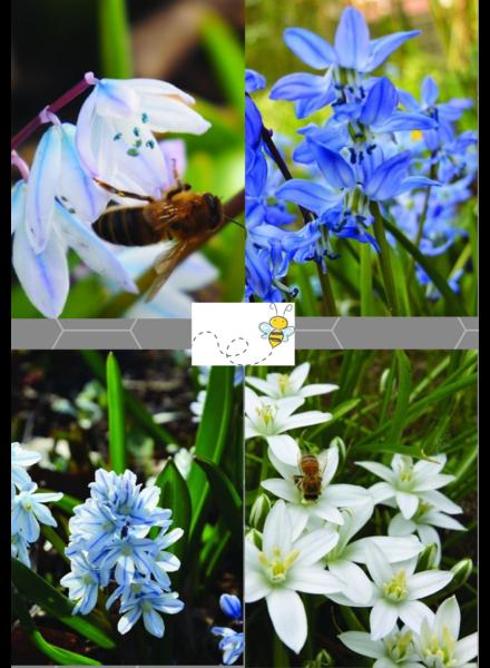 Bienen Mix 01 - blue shades