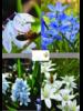 Bienen Mix 01 - blue shades - chemiefreier Anbau