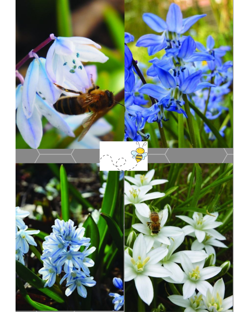 Bijen Mix 01 - blue shades  - 100% chemievrij geteeld