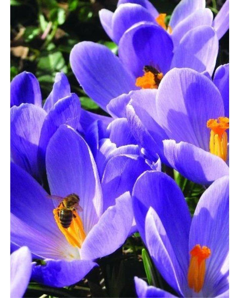 Medium Beekeeper package 1  with 400 pcs. 100% Chemicalfree grown.