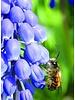 Groot imkerpakket E met 700 bloembollen. Aanvulling voor wie al bollen heeft staan. De vroegste bloeiers met de hoogste nectar- en stuifmeelwaarde.