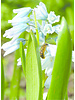 Wilde Bijen Mix 2021-04