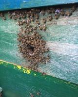 Medium Beekeeperpackage 5 - 2021