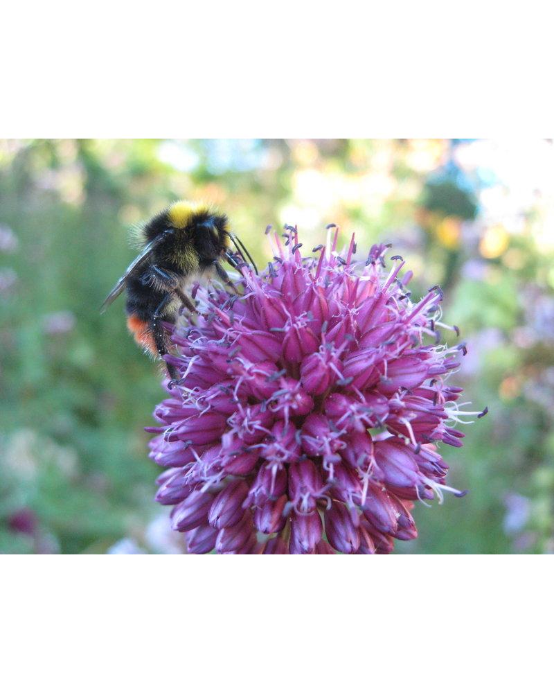 Wilde Bijen Mix 2021-05