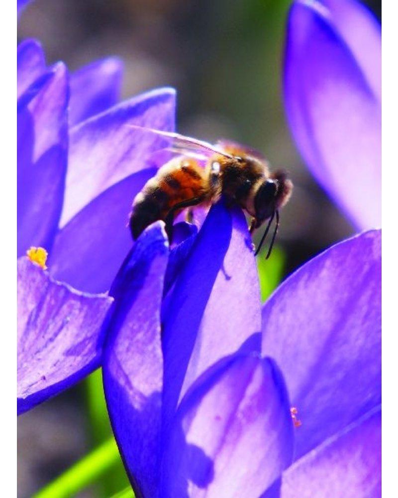 Small Beekeeper package  05 - 100% Chemicalfree grown.