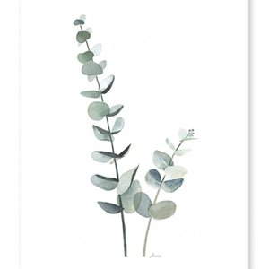 Lilipinso Eucalyptus poster