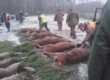 drijfjacht in Polen