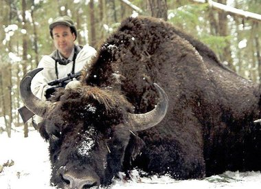 Bison hunting in Poland