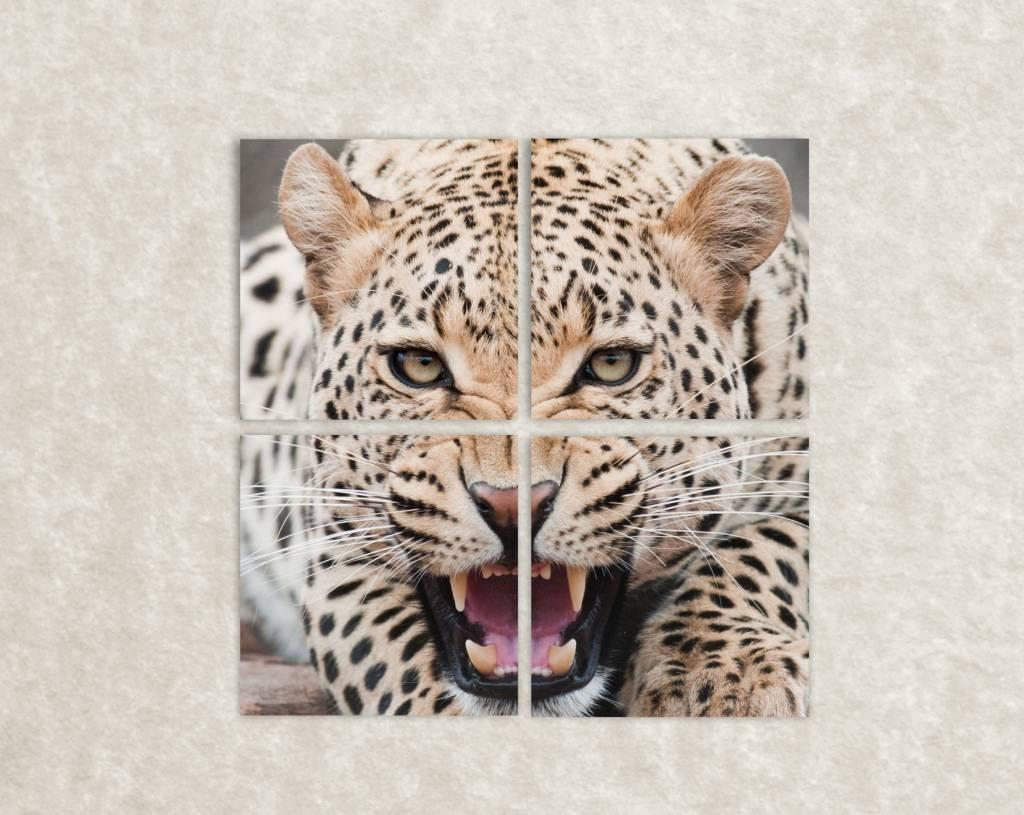 Canvas foto van een Luipaard