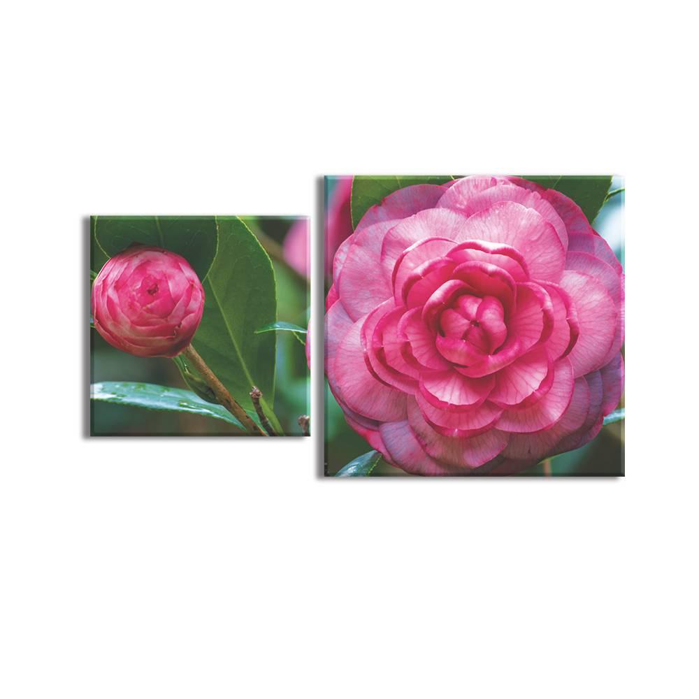 Foto op canvas - bloemen - 2F2
