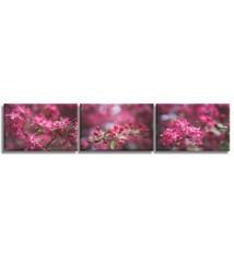Foto op canvas - bloemen - 6F3