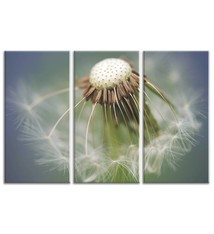 Foto op canvas - bloemen - 7F3