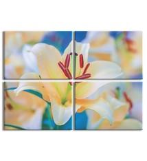 Foto op canvas - bloemen - 6F4