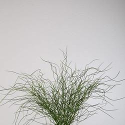 Grasplant Long Moss Bush - Ø15xH50 cm