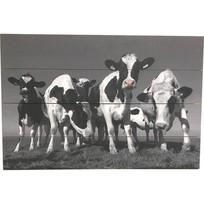 Schilderij Vrolijke Koeien Planken - 60xH40 cm