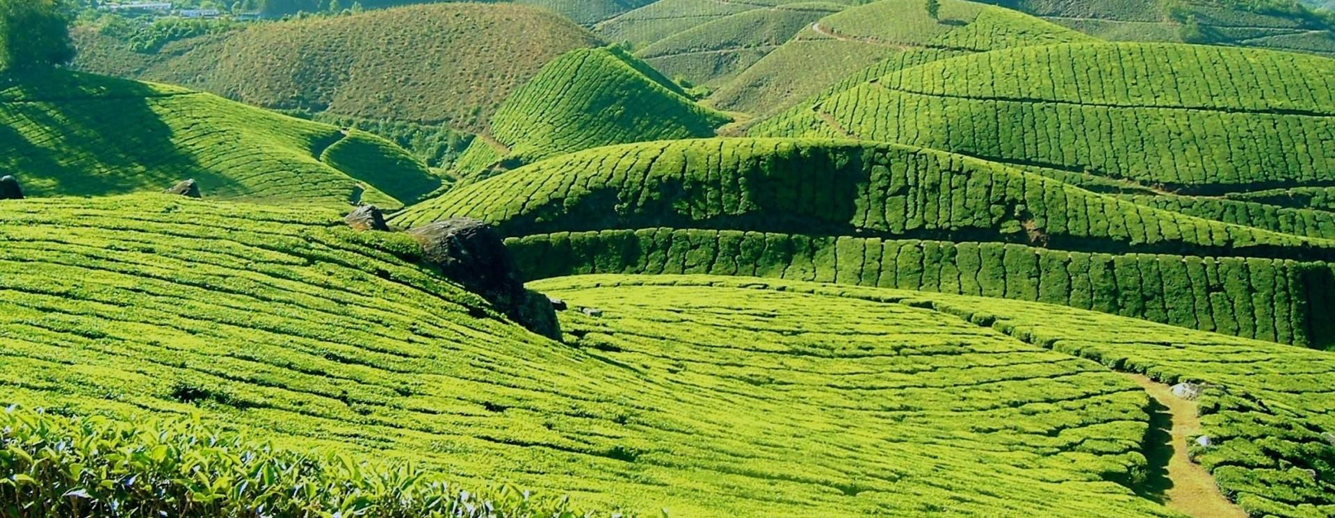 Alle unsere natürlichen Teesorten