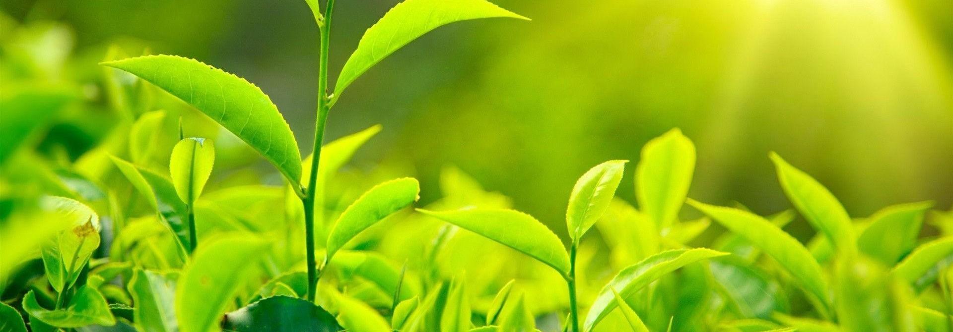 Nos thés biologiques