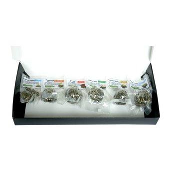 6 Theebloemen + Theepotje 350ml in Glas