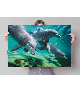 Poster Dolfijnen onder water