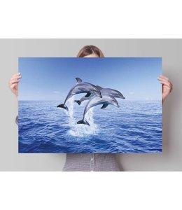 Poster Dolfijnen trio