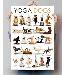 Poster Yoga honden