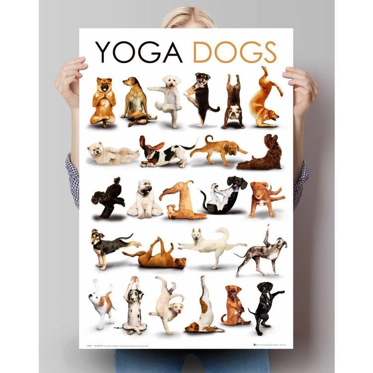 Yoga honden  - Poster 61 x 91.5 cm