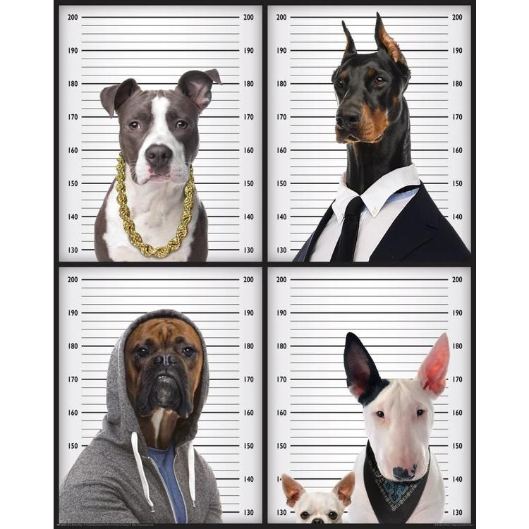 Wanted Dogs Pitbull Boxer Chihuahua Dobermann Bull Terrier - Poster 40 x 50 cm