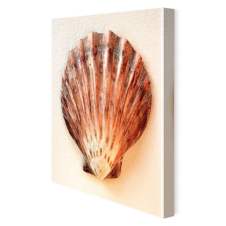 Schelpen Tropische schelp - Schilderij 30 x 30 cm