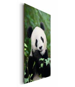 Schilderij Jungle Panda