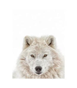 Poster Witte wolf Roofdier - Natuur - Winter