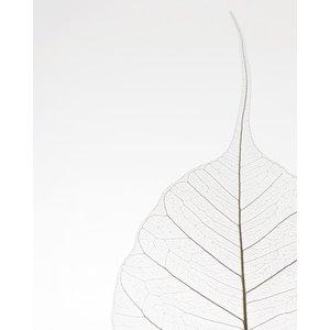 Poster Blad Natuur - Eenvoud - Plant